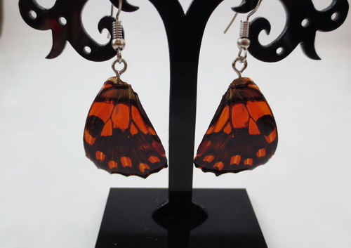 boucles d'oreilles papillons orange